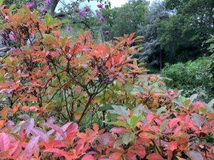 autumnal scene, accommodation windsor ltd
